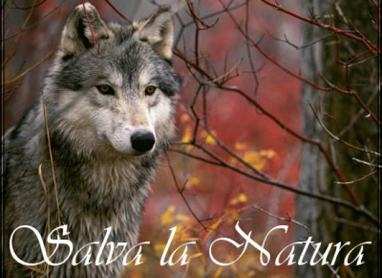 Immagini il regno della natura tutto sugli animali - Due caratteri diversi ...